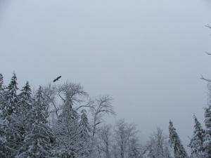 Last winter's heron