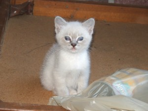Zim when he was first found as a drop off in the woods.