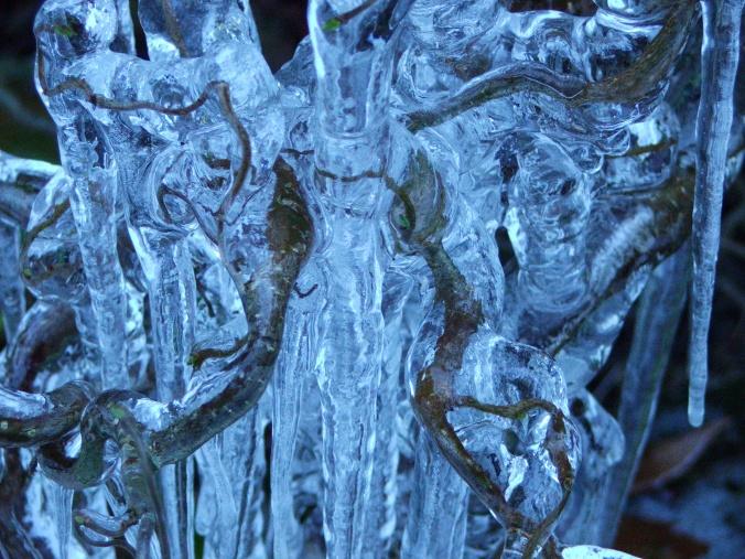 iced filbert 010