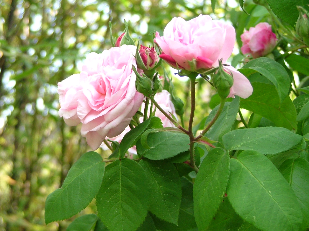 garden june 07 014